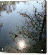 Cypress Knees And Sunshine Acrylic Print