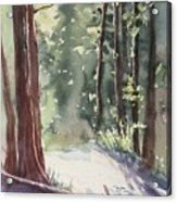 Cypress Mt. Acrylic Print