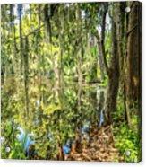 Cypress Pond Delight Acrylic Print