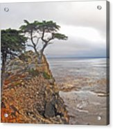 Cypress Tree At Pebble Beach Acrylic Print