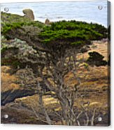 Cypress Tree In Point Lobos State Reserve Near Monterey-california  Acrylic Print