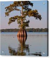 Cypress Tree On Reelfoot Lake Acrylic Print