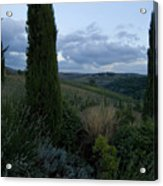 Cypress Trees Growing In The Rolling Acrylic Print
