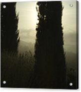 Cypress Trees Looming In Front Acrylic Print by Todd Gipstein