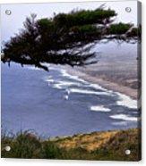Cypress View Acrylic Print
