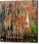 Cypress Winter Colors Acrylic Print