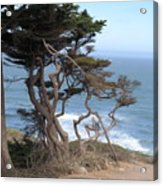 Cypress On The Cliff 15 Acrylic Print