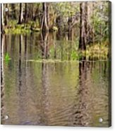 Cypresses Reflection Acrylic Print