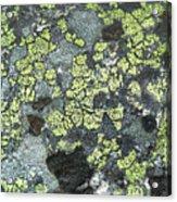 D07343-dc Lichen On Rock Acrylic Print