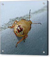 D2b6336-dc Colorful Insect On Sonoma Mountain Acrylic Print