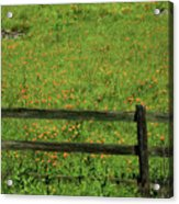 D7b6306 Fence And Poppies Acrylic Print