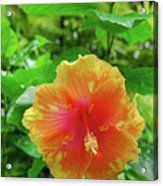 D9m-23 Orange Flower Acrylic Print