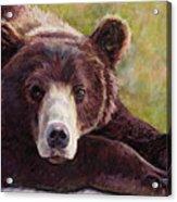 Da Bear Acrylic Print by Billie Colson