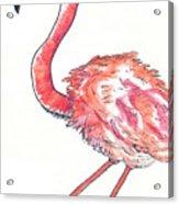 Da Flamingo Acrylic Print