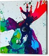 Da-moose Acrylic Print