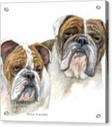 daBullies Acrylic Print by Mamie Greenfield