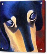 Dachshund - Oscar The Shelter Dog Acrylic Print