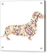 Dachshund Acrylic Print
