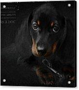 Dachshund - Puppy Love Acrylic Print