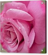 Daddy's Rose Acrylic Print