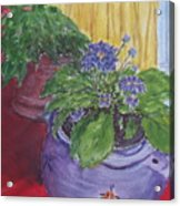 Dads Violets Acrylic Print