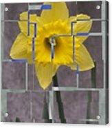 Daffodil 1 Acrylic Print