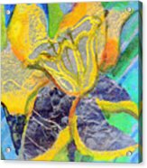 Daffodil Abstract Acrylic Print