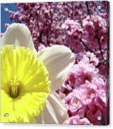 Daffodil Flower Art Prints Pink Tree Blossoms Blue Sky Baslee Acrylic Print