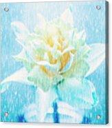 Daffodil Flower In Rain. Digital Art Acrylic Print