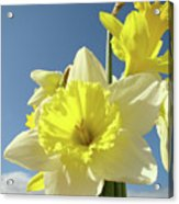 Daffodil Flowers Artwork Floral Photography Spring Flower Art Prints Acrylic Print