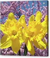 Daffodil Flowers Spring Pink Tree Blossoms Art Prints Baslee Troutman Acrylic Print
