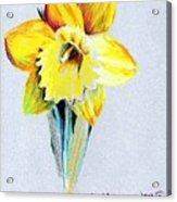 Daffodil Acrylic Print