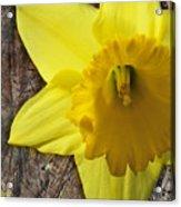 Daffodil Wood Composite Acrylic Print