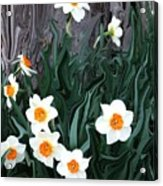 Daffodills Acrylic Print