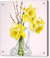 Daffodils And Pussy Willow Acrylic Print