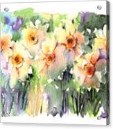 Daffodil's Dancing Acrylic Print
