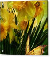 Daffodils - First Flower Of Spring Acrylic Print