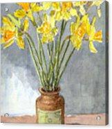 Daffodils In A Pot. Acrylic Print