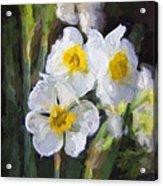 Daffodils In My Garden Acrylic Print