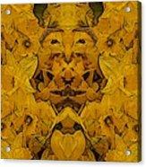 Daffy Daffodils Acrylic Print