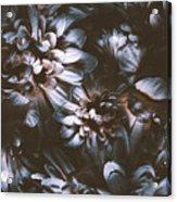 Dahlia Abstraction Acrylic Print
