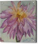 Dahlia At Eastport Me Acrylic Print