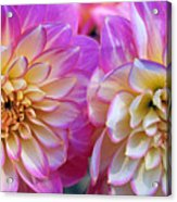 Dahlia Cousins Acrylic Print