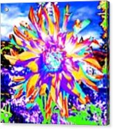 Dahlia Dazzle Acrylic Print