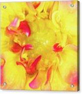 Dahlia Flower Acrylic Print