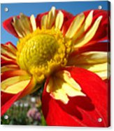 Dahlia Flower Art Prints Canvas Red Yellow Dahlias Baslee Troutman Acrylic Print