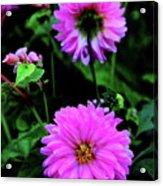 Dahlia Mirror Acrylic Print