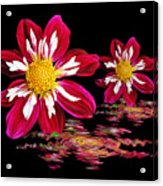 Dahlia Reflections Acrylic Print