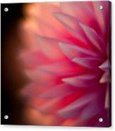 Dahlia Sunset Acrylic Print
