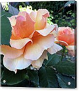 Daily Dose Of Beauty Acrylic Print